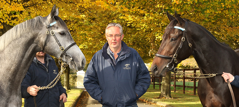 2 November 2016; Stephrn Collins with Awtaad, right, and Markaz at Derrinstown Stud. © Peter Mooney, 6, Cumberland Street, Dun Laoghaire, Co. Dublin, Ireland. Tel: 00 353 (0)86 2589298